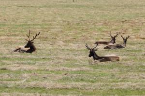 Dean Creek Elk Viewing Area on Hwy 38