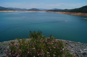 Shasta Lake as seen from the dam