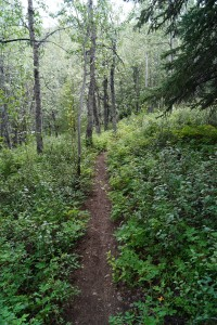Very steep, narrow, heavily wooded hike to the Klutina River.