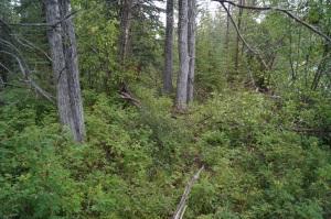 Narrow trail