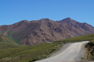 The only road in Denali National Park