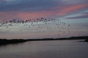 Sunrise from Bill's boat on the Myakka River
